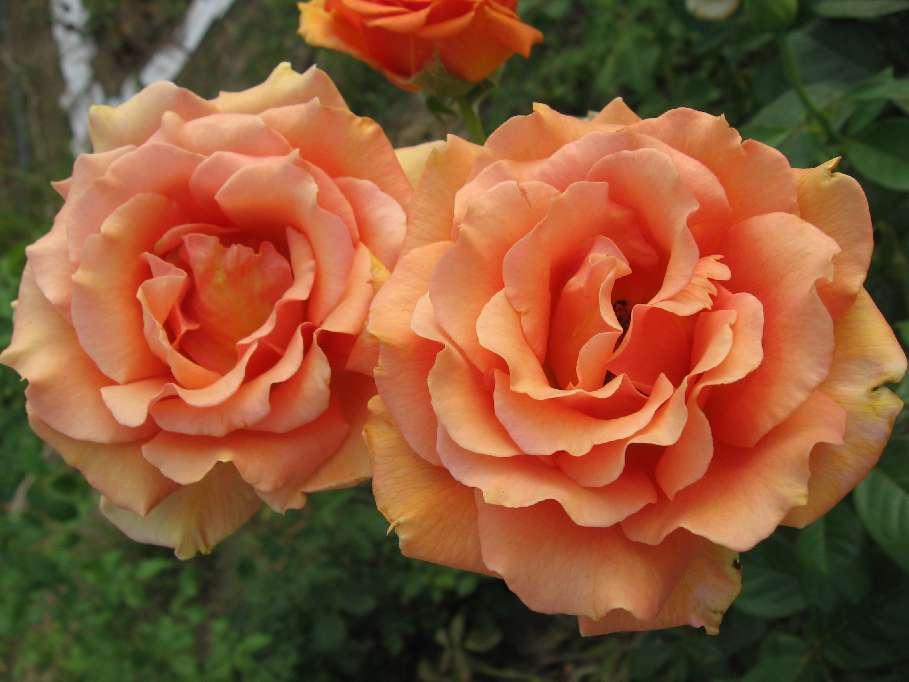 roza-ashram.jpeg