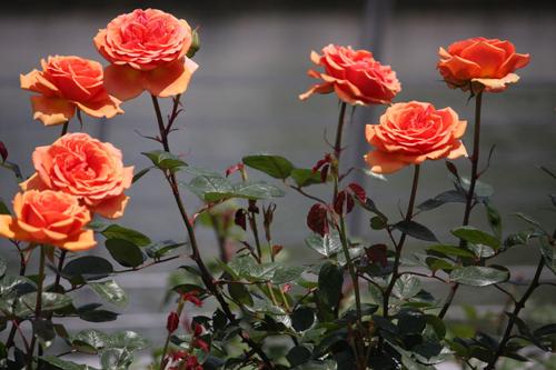 roza-ashram-3.jpg