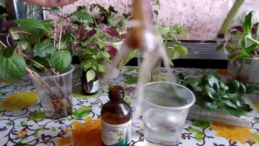 cherenkovanie-petunii-v-vode-1024x576.jpg